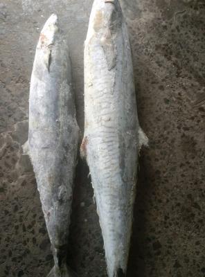 Ikan Alu Alu