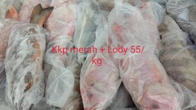 Ikan Kakap Merah / Lodi