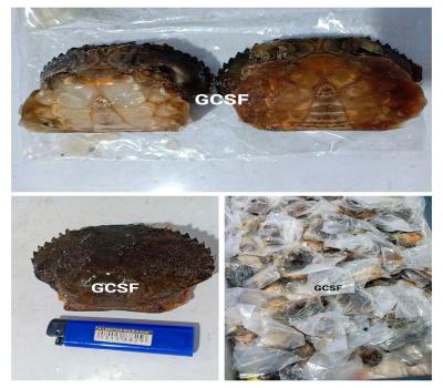 Kepiting Soka / Soft Shell Crab