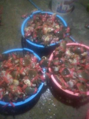 Kepiting