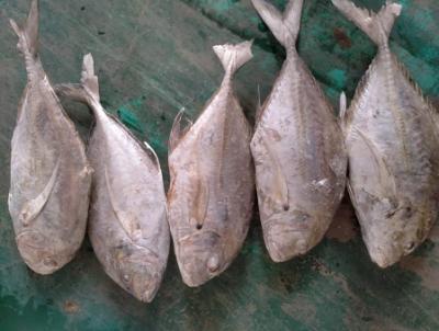 Ikan Kue Bongkok