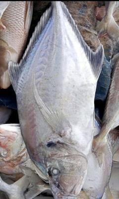 Ikan Kueh
